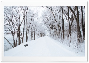 White Snowy Road HD Wide Wallpaper for Widescreen