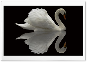 White Swan Reflection HD Wide Wallpaper for Widescreen