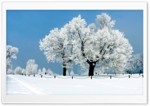 White Tree - Winter HD Wide Wallpaper for 4K UHD Widescreen desktop & smartphone