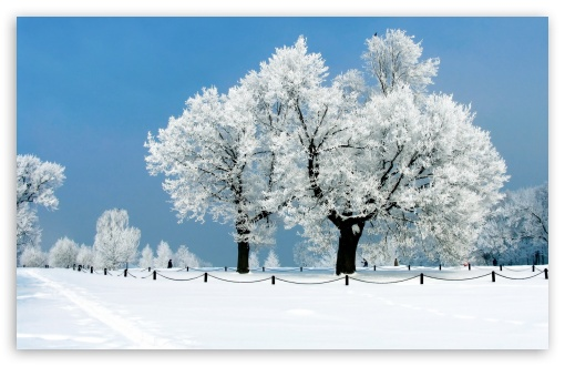 White Tree - Winter HD wallpaper for Standard 4:3 5:4 Fullscreen UXGA XGA SVGA QSXGA SXGA ; Wide 16:10 5:3 Widescreen WHXGA WQXGA WUXGA WXGA WGA ; HD 16:9 High Definition WQHD QWXGA 1080p 900p 720p QHD nHD ; Other 3:2 DVGA HVGA HQVGA devices ( Apple PowerBook G4 iPhone 4 3G 3GS iPod Touch ) ; Mobile VGA WVGA iPhone iPad PSP Phone - VGA QVGA Smartphone ( PocketPC GPS iPod Zune BlackBerry HTC Samsung LG Nokia Eten Asus ) WVGA WQVGA Smartphone ( HTC Samsung Sony Ericsson LG Vertu MIO ) HVGA Smartphone ( Apple iPhone iPod BlackBerry HTC Samsung Nokia ) Sony PSP Zune HD Zen ; Tablet 2 ;