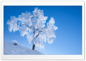 White Tree, Winter, Blue Sky Ultra HD Wallpaper for 4K UHD Widescreen desktop, tablet & smartphone