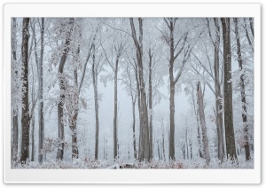 White Trees HD Wide Wallpaper for Widescreen