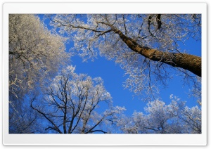 White Trees Against A Blue Sky HD Wide Wallpaper for 4K UHD Widescreen desktop & smartphone