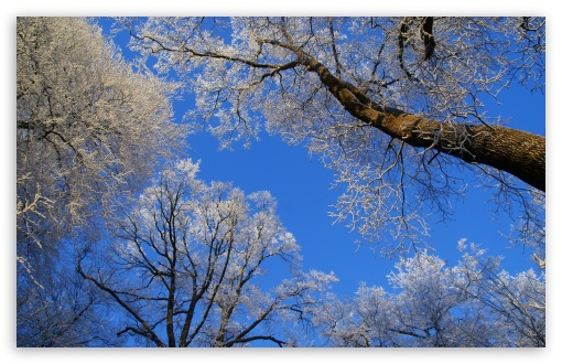 White Trees Against A Blue Sky HD wallpaper for Wide 16:10 5:3 Widescreen WHXGA WQXGA WUXGA WXGA WGA ; HD 16:9 High Definition WQHD QWXGA 1080p 900p 720p QHD nHD ; UHD 16:9 WQHD QWXGA 1080p 900p 720p QHD nHD ; Standard 4:3 5:4 3:2 Fullscreen UXGA XGA SVGA QSXGA SXGA DVGA HVGA HQVGA devices ( Apple PowerBook G4 iPhone 4 3G 3GS iPod Touch ) ; Tablet 1:1 ; iPad 1/2/Mini ; Mobile 4:3 5:3 3:2 16:9 5:4 - UXGA XGA SVGA WGA DVGA HVGA HQVGA devices ( Apple PowerBook G4 iPhone 4 3G 3GS iPod Touch ) WQHD QWXGA 1080p 900p 720p QHD nHD QSXGA SXGA ; Dual 16:10 5:3 16:9 4:3 5:4 WHXGA WQXGA WUXGA WXGA WGA WQHD QWXGA 1080p 900p 720p QHD nHD UXGA XGA SVGA QSXGA SXGA ;