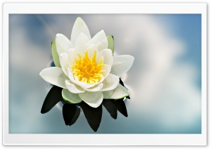 White Water Lily HD Wide Wallpaper for Widescreen