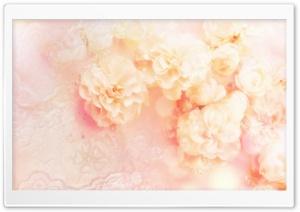 White Wild Rose HD Wide Wallpaper for 4K UHD Widescreen desktop & smartphone