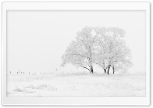 White Winter HD Wide Wallpaper for Widescreen