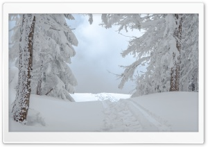 White Winter Snow Scene Ultra HD Wallpaper for 4K UHD Widescreen desktop, tablet & smartphone
