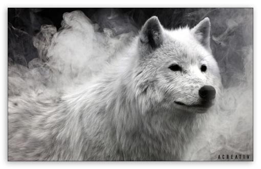 White Wolf Ultra Hd Desktop Background Wallpaper For Widescreen Ultrawide Desktop Laptop