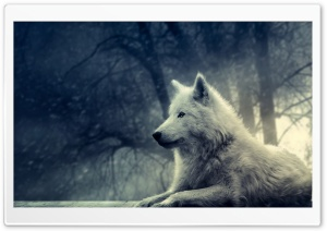 White Wolf Painting HD Wide Wallpaper for Widescreen