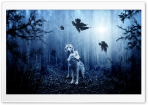 White Wolves, Forest, Autumn Ultra HD Wallpaper for 4K UHD Widescreen desktop, tablet & smartphone