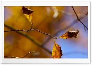 Whithered Autumn Leaves HD Wide Wallpaper for Widescreen