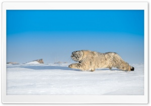 Wild Animal, Winter