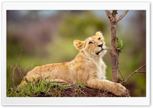 Wild Animals HD Wide Wallpaper for Widescreen