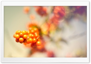Wild Berries HD Wide Wallpaper for Widescreen