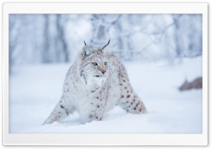 Wild Cat Ultra HD Wallpaper for 4K UHD Widescreen desktop, tablet & smartphone