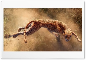 Wild Cheetah Animal Ultra HD Wallpaper for 4K UHD Widescreen desktop, tablet & smartphone