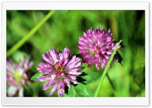 Wild Flowers HD Wide Wallpaper for Widescreen