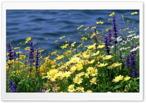 Wild Flowers And River HD Wide Wallpaper for Widescreen