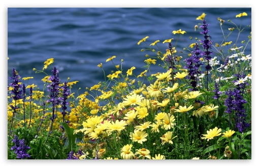 Wild Flowers And River HD wallpaper for Standard 4:3 5:4 Fullscreen UXGA XGA SVGA QSXGA SXGA ; Wide 16:10 5:3 Widescreen WHXGA WQXGA WUXGA WXGA WGA ; HD 16:9 High Definition WQHD QWXGA 1080p 900p 720p QHD nHD ; Other 3:2 DVGA HVGA HQVGA devices ( Apple PowerBook G4 iPhone 4 3G 3GS iPod Touch ) ; Mobile VGA WVGA iPhone iPad PSP Phone - VGA QVGA Smartphone ( PocketPC GPS iPod Zune BlackBerry HTC Samsung LG Nokia Eten Asus ) WVGA WQVGA Smartphone ( HTC Samsung Sony Ericsson LG Vertu MIO ) HVGA Smartphone ( Apple iPhone iPod BlackBerry HTC Samsung Nokia ) Sony PSP Zune HD Zen ; Tablet 2 ; Dual 4:3 5:4 16:10 5:3 16:9 UXGA XGA SVGA QSXGA SXGA WHXGA WQXGA WUXGA WXGA WGA WQHD QWXGA 1080p 900p 720p QHD nHD ;