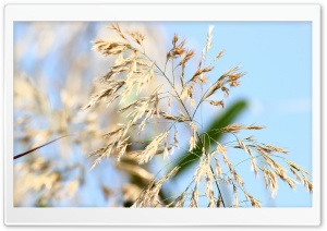 Wild Grass HD Wide Wallpaper for Widescreen