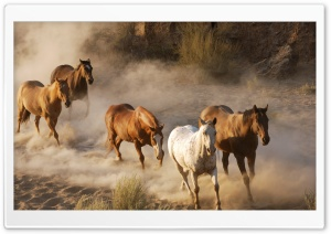 Wild Horse Herd HD Wide Wallpaper for Widescreen