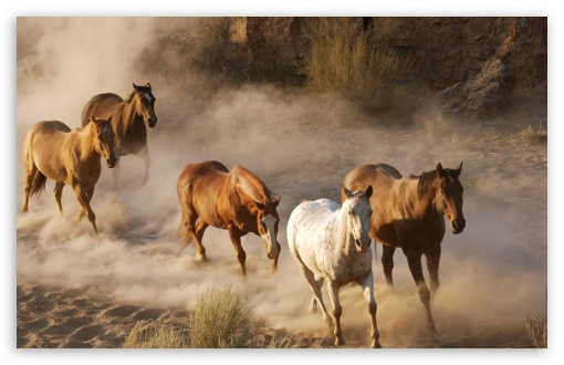 Wild Horse Herd HD wallpaper for Wide 16:10 5:3 Widescreen WHXGA WQXGA WUXGA WXGA WGA ; HD 16:9 High Definition WQHD QWXGA 1080p 900p 720p QHD nHD ; Standard 4:3 3:2 Fullscreen UXGA XGA SVGA DVGA HVGA HQVGA devices ( Apple PowerBook G4 iPhone 4 3G 3GS iPod Touch ) ; Tablet 1:1 ; iPad 1/2/Mini ; Mobile 4:3 5:3 3:2 16:9 - UXGA XGA SVGA WGA DVGA HVGA HQVGA devices ( Apple PowerBook G4 iPhone 4 3G 3GS iPod Touch ) WQHD QWXGA 1080p 900p 720p QHD nHD ;