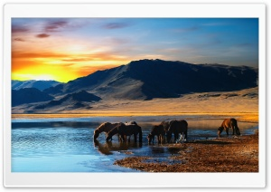 Wild Horses HD Wide Wallpaper for Widescreen