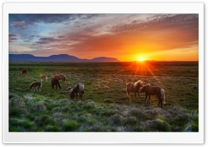 Wild Horses At Sunset HD Wide Wallpaper for 4K UHD Widescreen desktop & smartphone