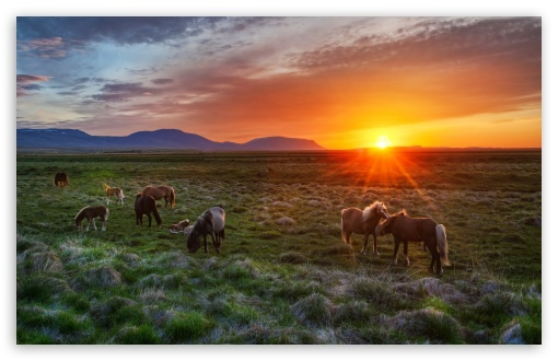 Wild Horses At Sunset HD wallpaper for Standard 4:3 5:4 Fullscreen UXGA XGA SVGA QSXGA SXGA ; Wide 16:10 5:3 Widescreen WHXGA WQXGA WUXGA WXGA WGA ; HD 16:9 High Definition WQHD QWXGA 1080p 900p 720p QHD nHD ; Other 3:2 DVGA HVGA HQVGA devices ( Apple PowerBook G4 iPhone 4 3G 3GS iPod Touch ) ; Mobile VGA WVGA iPhone iPad PSP Phone - VGA QVGA Smartphone ( PocketPC GPS iPod Zune BlackBerry HTC Samsung LG Nokia Eten Asus ) WVGA WQVGA Smartphone ( HTC Samsung Sony Ericsson LG Vertu MIO ) HVGA Smartphone ( Apple iPhone iPod BlackBerry HTC Samsung Nokia ) Sony PSP Zune HD Zen ; Tablet 2 Android 3 DVGA HVGA HQVGA devices ( Apple PowerBook G4 iPhone 4 3G 3GS iPod Touch ) ; Dual 4:3 5:4 16:10 5:3 16:9 UXGA XGA SVGA QSXGA SXGA WHXGA WQXGA WUXGA WXGA WGA WQHD QWXGA 1080p 900p 720p QHD nHD ;