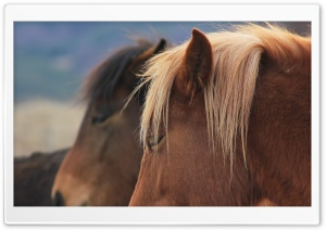 Wild Horses Bulgaria HD Wide Wallpaper for 4K UHD Widescreen desktop & smartphone