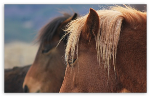Wild Horses Bulgaria HD wallpaper for Wide 16:10 5:3 Widescreen WHXGA WQXGA WUXGA WXGA WGA ; HD 16:9 High Definition WQHD QWXGA 1080p 900p 720p QHD nHD ; Standard 4:3 5:4 3:2 Fullscreen UXGA XGA SVGA QSXGA SXGA DVGA HVGA HQVGA devices ( Apple PowerBook G4 iPhone 4 3G 3GS iPod Touch ) ; Tablet 1:1 ; iPad 1/2/Mini ; Mobile 4:3 5:3 3:2 5:4 - UXGA XGA SVGA WGA DVGA HVGA HQVGA devices ( Apple PowerBook G4 iPhone 4 3G 3GS iPod Touch ) QSXGA SXGA ;