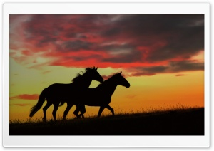 Wild Horses Running HD Wide Wallpaper for Widescreen