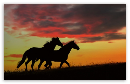 Wild Horses Running HD wallpaper for Wide 16:10 5:3 Widescreen WHXGA WQXGA WUXGA WXGA WGA ; HD 16:9 High Definition WQHD QWXGA 1080p 900p 720p QHD nHD ; Standard 4:3 5:4 3:2 Fullscreen UXGA XGA SVGA QSXGA SXGA DVGA HVGA HQVGA devices ( Apple PowerBook G4 iPhone 4 3G 3GS iPod Touch ) ; Tablet 1:1 ; iPad 1/2/Mini ; Mobile 4:3 5:3 3:2 16:9 5:4 - UXGA XGA SVGA WGA DVGA HVGA HQVGA devices ( Apple PowerBook G4 iPhone 4 3G 3GS iPod Touch ) WQHD QWXGA 1080p 900p 720p QHD nHD QSXGA SXGA ;