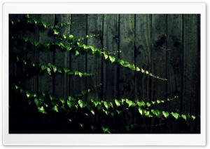 Wild Ivy HD Wide Wallpaper for Widescreen