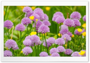 Wild Purple Flowers HD Wide Wallpaper for Widescreen