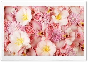 Wild Roses And Orchids HD Wide Wallpaper for Widescreen
