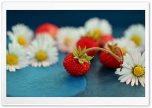 Wild Strawberries and Daisies HD Wide Wallpaper for Widescreen