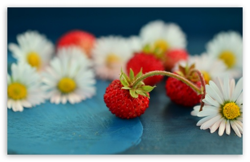 Wild Strawberries and Daisies ❤ 4K UHD Wallpaper for Wide 16:10 5:3 Widescreen WHXGA WQXGA WUXGA WXGA WGA ; 4K UHD 16:9 Ultra High Definition 2160p 1440p 1080p 900p 720p ; UHD 16:9 2160p 1440p 1080p 900p 720p ; Standard 4:3 5:4 3:2 Fullscreen UXGA XGA SVGA QSXGA SXGA DVGA HVGA HQVGA ( Apple PowerBook G4 iPhone 4 3G 3GS iPod Touch ) ; Tablet 1:1 ; iPad 1/2/Mini ; Mobile 4:3 5:3 3:2 16:9 5:4 - UXGA XGA SVGA WGA DVGA HVGA HQVGA ( Apple PowerBook G4 iPhone 4 3G 3GS iPod Touch ) 2160p 1440p 1080p 900p 720p QSXGA SXGA ;