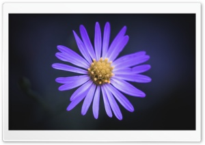 Wildflower HD Wide Wallpaper for Widescreen