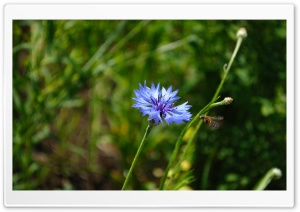 Wildflower Summer HD Wide Wallpaper for Widescreen