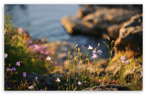 Wildflowers ❤ 4K UHD Wallpaper for Wide 16:10 5:3 Widescreen WHXGA WQXGA WUXGA WXGA WGA ; UltraWide 21:9 24:10 ; 4K UHD 16:9 Ultra High Definition 2160p 1440p 1080p 900p 720p ; UHD 16:9 2160p 1440p 1080p 900p 720p ; Standard 4:3 5:4 3:2 Fullscreen UXGA XGA SVGA QSXGA SXGA DVGA HVGA HQVGA ( Apple PowerBook G4 iPhone 4 3G 3GS iPod Touch ) ; Smartphone 3:2 DVGA HVGA HQVGA ( Apple PowerBook G4 iPhone 4 3G 3GS iPod Touch ) ; Tablet 1:1 ; iPad 1/2/Mini ; Mobile 4:3 5:3 3:2 16:9 5:4 - UXGA XGA SVGA WGA DVGA HVGA HQVGA ( Apple PowerBook G4 iPhone 4 3G 3GS iPod Touch ) 2160p 1440p 1080p 900p 720p QSXGA SXGA ;