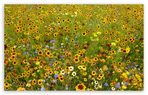 Wildflowers ❤ 4K UHD Wallpaper for Wide 16:10 5:3 Widescreen WHXGA WQXGA WUXGA WXGA WGA ; 4K UHD 16:9 Ultra High Definition 2160p 1440p 1080p 900p 720p ; UHD 16:9 2160p 1440p 1080p 900p 720p ; Standard 4:3 5:4 3:2 Fullscreen UXGA XGA SVGA QSXGA SXGA DVGA HVGA HQVGA ( Apple PowerBook G4 iPhone 4 3G 3GS iPod Touch ) ; Smartphone 5:3 WGA ; Tablet 1:1 ; iPad 1/2/Mini ; Mobile 4:3 5:3 3:2 16:9 5:4 - UXGA XGA SVGA WGA DVGA HVGA HQVGA ( Apple PowerBook G4 iPhone 4 3G 3GS iPod Touch ) 2160p 1440p 1080p 900p 720p QSXGA SXGA ; Dual 16:10 5:3 16:9 4:3 5:4 WHXGA WQXGA WUXGA WXGA WGA 2160p 1440p 1080p 900p 720p UXGA XGA SVGA QSXGA SXGA ;