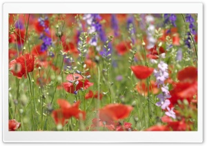 Wildflowers Close-up HD Wide Wallpaper for Widescreen