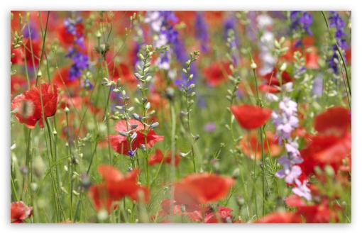 Wildflowers Close-up ❤ 4K UHD Wallpaper for Wide 16:10 5:3 Widescreen WHXGA WQXGA WUXGA WXGA WGA ; 4K UHD 16:9 Ultra High Definition 2160p 1440p 1080p 900p 720p ; Standard 4:3 5:4 3:2 Fullscreen UXGA XGA SVGA QSXGA SXGA DVGA HVGA HQVGA ( Apple PowerBook G4 iPhone 4 3G 3GS iPod Touch ) ; Tablet 1:1 ; iPad 1/2/Mini ; Mobile 4:3 5:3 3:2 16:9 5:4 - UXGA XGA SVGA WGA DVGA HVGA HQVGA ( Apple PowerBook G4 iPhone 4 3G 3GS iPod Touch ) 2160p 1440p 1080p 900p 720p QSXGA SXGA ; Dual 16:10 5:3 16:9 4:3 5:4 WHXGA WQXGA WUXGA WXGA WGA 2160p 1440p 1080p 900p 720p UXGA XGA SVGA QSXGA SXGA ;