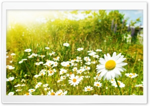 Wildflowers, Sunny Day HD Wide Wallpaper for Widescreen