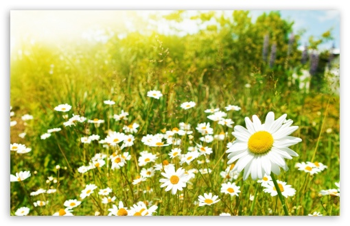 Wildflowers, Sunny Day ❤ 4K UHD Wallpaper for Wide 16:10 5:3 Widescreen WHXGA WQXGA WUXGA WXGA WGA ; 4K UHD 16:9 Ultra High Definition 2160p 1440p 1080p 900p 720p ; Standard 4:3 5:4 3:2 Fullscreen UXGA XGA SVGA QSXGA SXGA DVGA HVGA HQVGA ( Apple PowerBook G4 iPhone 4 3G 3GS iPod Touch ) ; Tablet 1:1 ; iPad 1/2/Mini ; Mobile 4:3 5:3 3:2 16:9 5:4 - UXGA XGA SVGA WGA DVGA HVGA HQVGA ( Apple PowerBook G4 iPhone 4 3G 3GS iPod Touch ) 2160p 1440p 1080p 900p 720p QSXGA SXGA ; Dual 16:10 5:3 4:3 5:4 WHXGA WQXGA WUXGA WXGA WGA UXGA XGA SVGA QSXGA SXGA ;