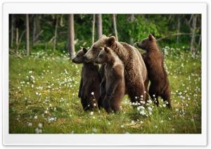 Wildlife Environment Ultra HD Wallpaper for 4K UHD Widescreen desktop, tablet & smartphone