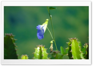 Will to Survive, A Blue Flower HD Wide Wallpaper for Widescreen