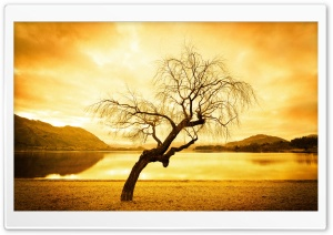 Willow Tree HD Wide Wallpaper for Widescreen